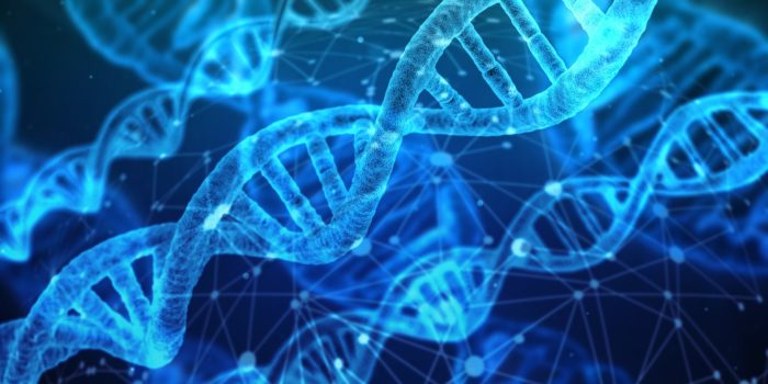 DNA Weight Loss Plan